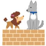 ミックス犬で失敗しないために気を付ける事や、おすすめの種類を紹介