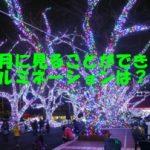 東京都内で4月にイルミネーションが見られるのはどこ?オススメは・・・