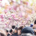 上野公園での花見の場所取りルールとポイント、平日でも場所取りは必要?
