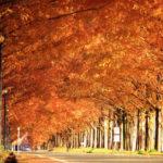 【近畿】秋は紅葉の季節!おススメ紅葉スポットまとめ