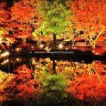 【東海編】秋は紅葉の季節!おススメ紅葉スポットまとめ