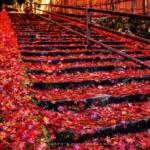 【中国】秋は紅葉の季節!おススメ紅葉スポットまとめ